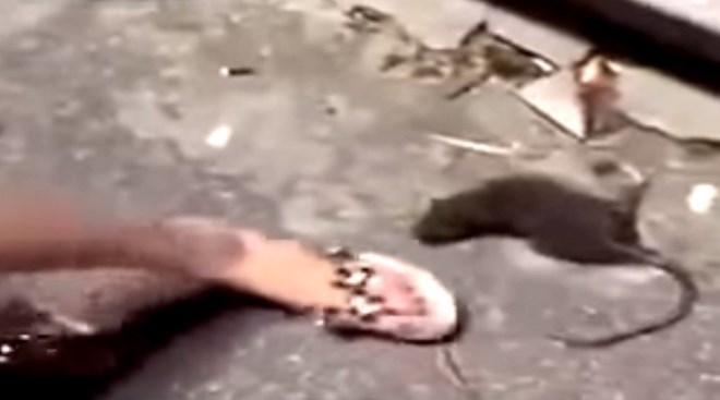 Bị giẫm đạp, con chuột cố vùng dậy để trả thù người phụ nữ - Ảnh 2.