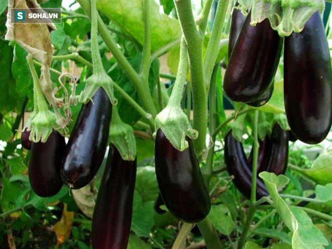 Món ăn màu tím: Siêu thực phẩm khiến cơ thể trẻ mãi không già - Ảnh 1.