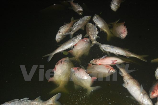 Kinh hoàng cá chết dạt vào bờ dài cả cây số ở hồ Linh Đàm - Ảnh 1.