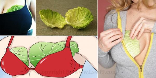 Đặt lá bắp cải vào ngực và chân trước khi đi ngủ - bạn sẽ thấy điều kì diệu xảy ra - Ảnh 1.