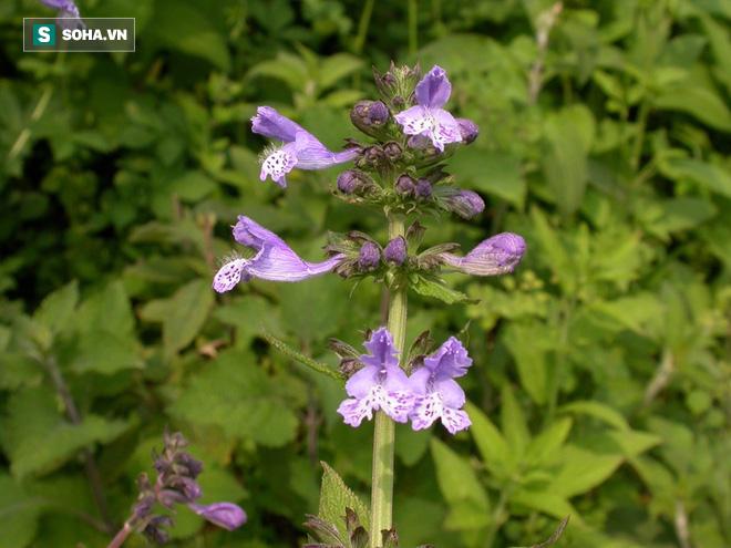 Bài thuốc Biệt dược tứ vị chữa chứng bệnh chân bốc mùi, tay ướt sũng - Ảnh 6.