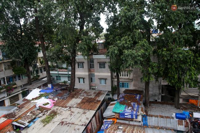 Lạ kỳ hàng cây cổ thụ trăm tuổi mọc xuyên nhà dân ngay trung tâm Sài Gòn - Ảnh 1.