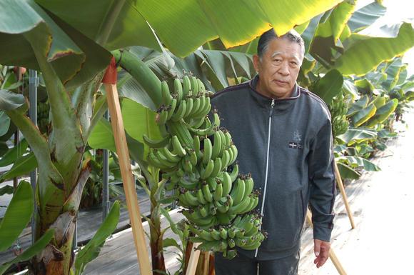 Lão nông Nhật tìm ra chìa khóa giải quyết tình trạng thiếu lương thực toàn cầu sau khi tái tạo kỷ băng hà để trồng chuối - Ảnh 1.
