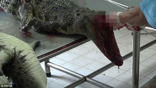 Cảnh tượng rùng mình bên trong một trang trại cá sấu ở Việt Nam lên báo nước ngoài - Ảnh 2.
