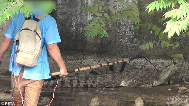 Cảnh tượng rùng mình bên trong một trang trại cá sấu ở Việt Nam lên báo nước ngoài - Ảnh 6.