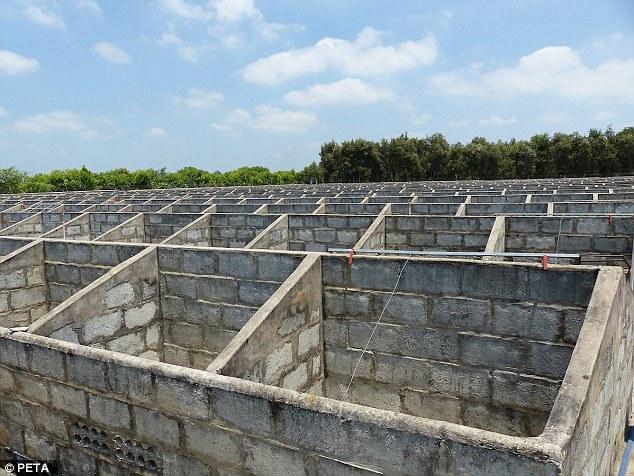 Cảnh tượng rùng mình bên trong một trang trại cá sấu ở Việt Nam lên báo nước ngoài - Ảnh 8.