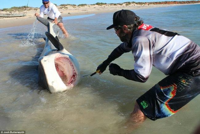 Thanh niên xuống biển kéo cá mập lên bờ chụp ảnh - Ảnh 2.