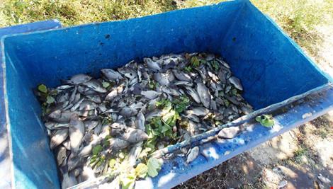 Quảng Nam: Cá chết nổi đầy hồ Nguyễn Du - Ảnh 2.