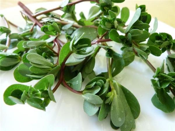 Thực hư tác dụng chữa bệnh ung thư của cây rau sam - Ảnh 2.