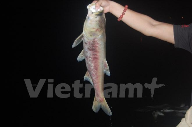 Kinh hoàng cá chết dạt vào bờ dài cả cây số ở hồ Linh Đàm - Ảnh 2.