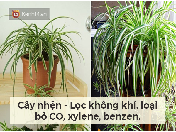 Lọc sạch không khí quanh bạn bằng những loại cây cảnh dễ tìm - Ảnh 3.