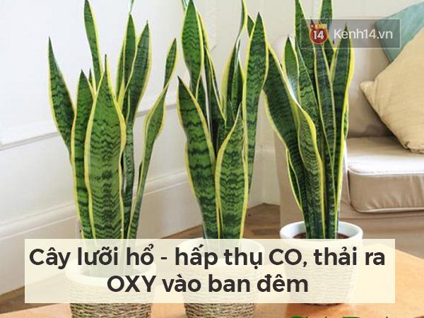 Lọc sạch không khí quanh bạn bằng những loại cây cảnh dễ tìm - Ảnh 4.