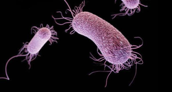10 vi khuẩn cần phải đề phòng khi thời đại kháng kháng sinh đã đến - Ảnh 4.