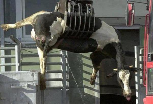Phía sau những cốc sữa bò thơm ngon, không thể ngờ, lại là cả 1 địa ngục trần gian - Ảnh 4.