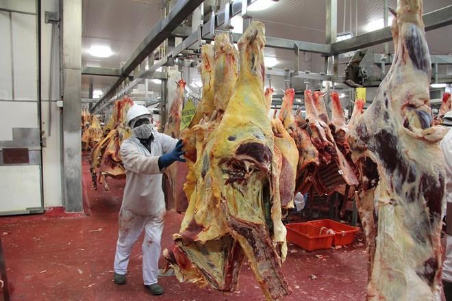 Quy trình giết mổ bò đúng tiêu chuẩn ở Australia - Ảnh 5.