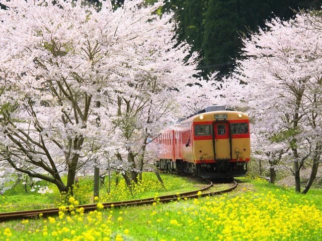 19 bức ảnh lý giải vì sao Nhật Bản có tới 2 thành phố đáng sống nhất thế giới - Ảnh 6.