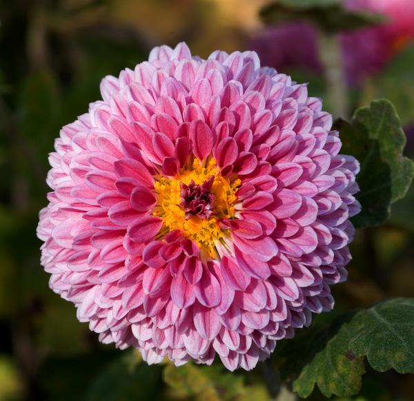 7 loại cây lọc thanh không khí nên trồng trong nhà để hỗ trợ sức khỏe - Ảnh 6.