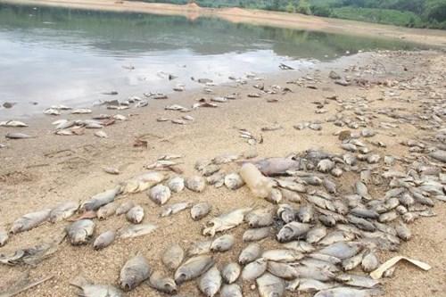Cá chết hàng loạt, phủ trắng hồ ở Quảng Nam - Ảnh 7.