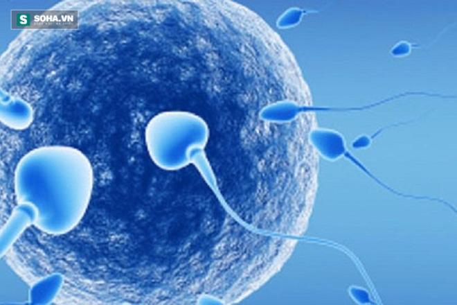 4 bí quyết giúp bồi bổ tinh trùng, giúp tăng khả năng thụ thai - Ảnh 1.