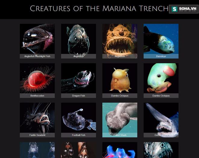 Những quái vật biển thống lĩnh vùng biển sâu nhất hành tinh - Ảnh 2.