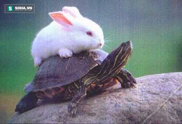 Clip ngắn về con rùa trên máy chạy khiến loài người phải ái ngại - Ảnh 1.