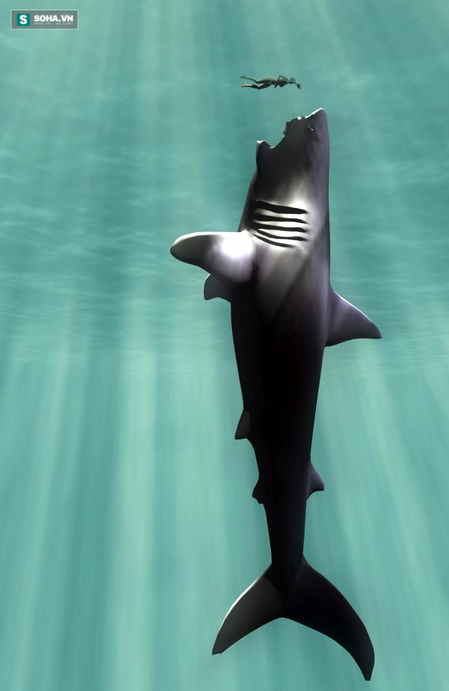 Siêu cá mập lớn nhất Trái Đất Megalodon biến mất, vì sao? - Ảnh 1.