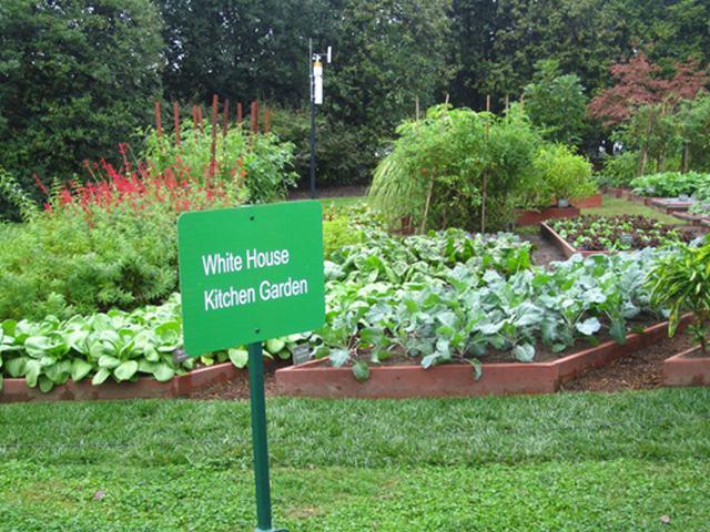 Loại cây được ví là sâm nam của VN có trong vườn nhà Obama - Ảnh 1.