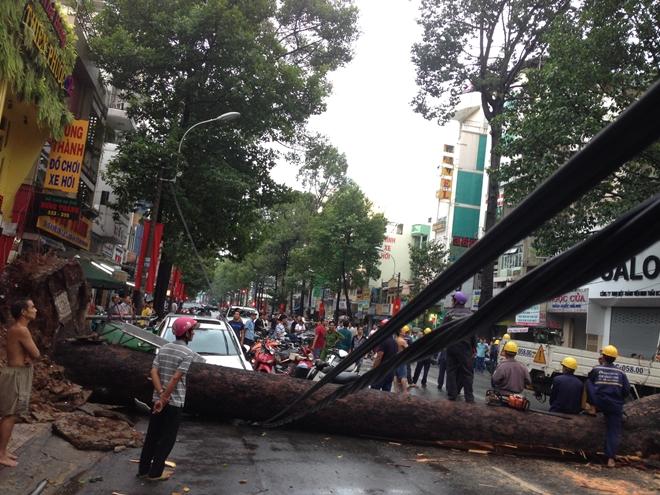 Đang đứng trước cửa tiệm bị cây cổ thụ 30m bật gốc đè tử vong - Ảnh 3.