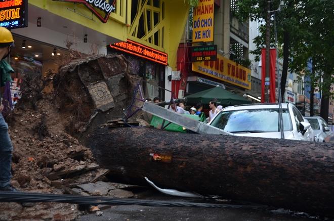 Đang đứng trước cửa tiệm bị cây cổ thụ 30m bật gốc đè tử vong - Ảnh 4.