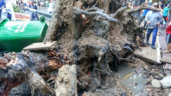 Đang đứng trước cửa tiệm bị cây cổ thụ 30m bật gốc đè tử vong - Ảnh 5.