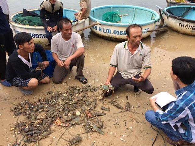 [ẢNH] Xót cảnh tôm hùm chết hàng loạt, người dân bỗng chốc trắng tay ở Phú Yên - Ảnh 2.