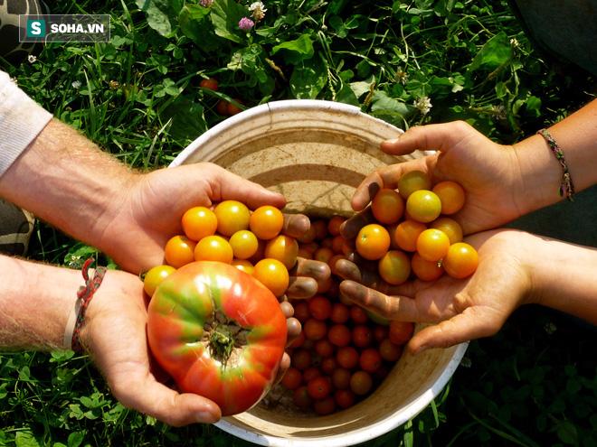 81,6 tỉ USD và những con số ấn tượng về nền nông nghiệp hữu cơ trên thế giới - Ảnh 1.