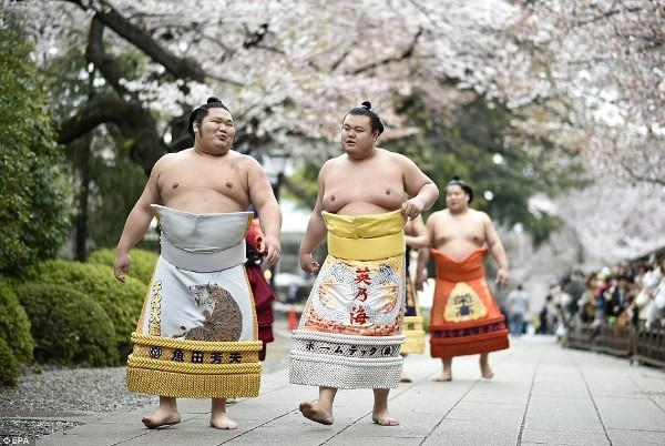 Thế giới u ám của võ sĩ sumo tại Nhật: Không lương, không điện thoại, không bạn gái - Ảnh 7.