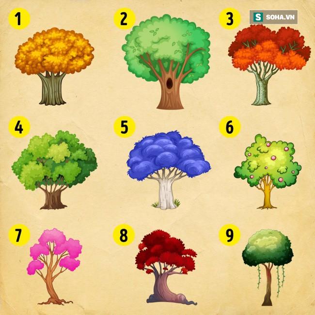 Bạn chọn cái cây nào? Điều đó sẽ tiết lộ vận may của bạn trong năm mới - Ảnh 1.