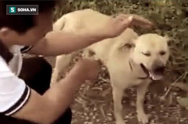 Bị chôn sống, bé trai sơ sinh may mắn được chú chó anh hùng cứu mạng - Ảnh 2.