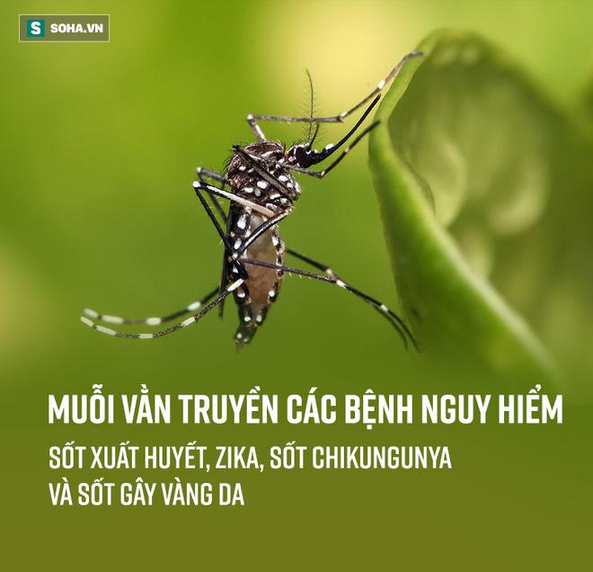 Bắt thóp tập tính muỗi truyền sốt xuất huyết: Lo trong nhà bạn, không cần lo hàng xóm! - Ảnh 6.