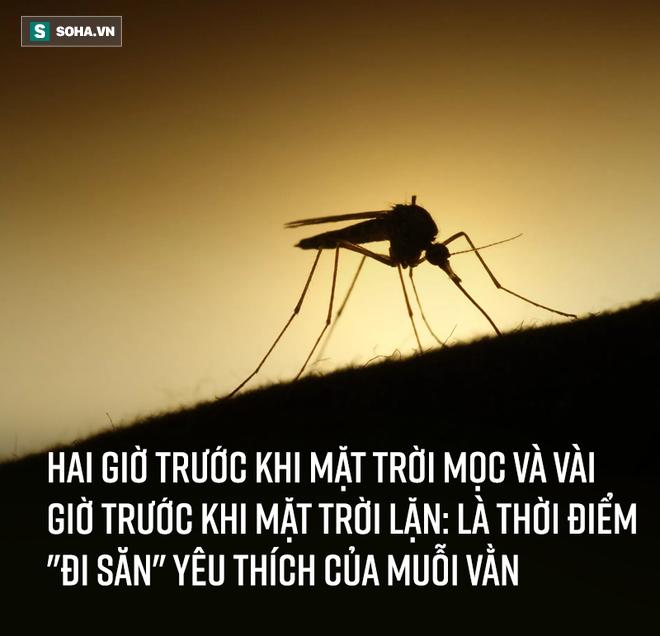Bắt thóp tập tính muỗi truyền sốt xuất huyết: Lo trong nhà bạn, không cần lo hàng xóm! - Ảnh 4.