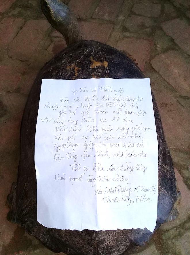 Rùa khủng vân vàng sắp tuyệt chủng được giải cứu - Ảnh 4.