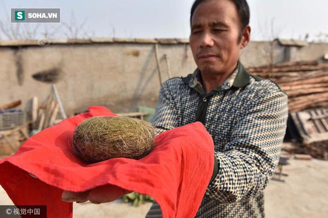 Phát hiện vật thể lạ trong bụng lợn nhà nuôi, được định giá hơn chục tỉ đồng - Ảnh 1.