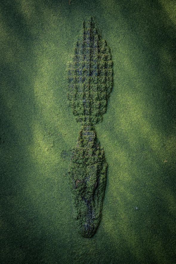 Bộ ảnh tuyệt vời của National Geographic: Khi thế giới hoang dã hóa mình thành kiệt tác - Ảnh 5.