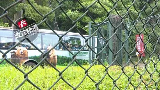 3 khách vượt tường vào vườn thú hoang dã, lúc tiếp đất xung quanh có đến 7 con hổ dữ - Ảnh 2.