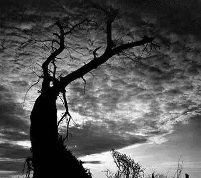 Tù binh bị đồng đội căm hận và báo thù đến chết, 60 năm sau, phát hiện từ một gốc cây gây chấn động nước Anh! - Ảnh 2.