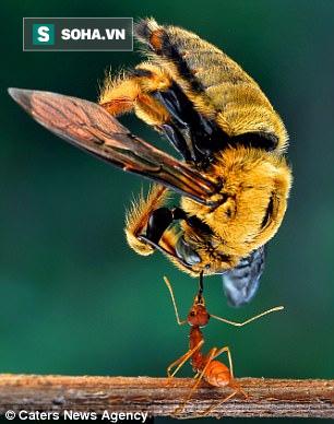 4 điều thú vị về loài kiến, có thể dạy cho con người những bài học giá trị - Ảnh 1.