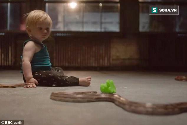 Bí mật đằng sau video em bé một mình trong phòng đầy rắn của BBC Earth - Ảnh 6.