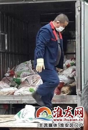 Sau sự cố chết người, cả thị trấn lùng sục tiêu diệt, cấm toàn bộ dân chúng nuôi chó - Ảnh 1.