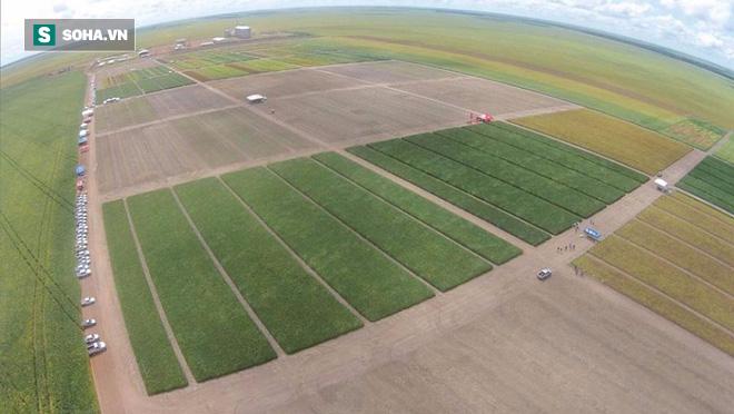 Trung Quốc và Nga bắt tay, chuẩn bị cho ra đời trang trại sản xuất sữa lớn nhất thế giới - Ảnh 2.