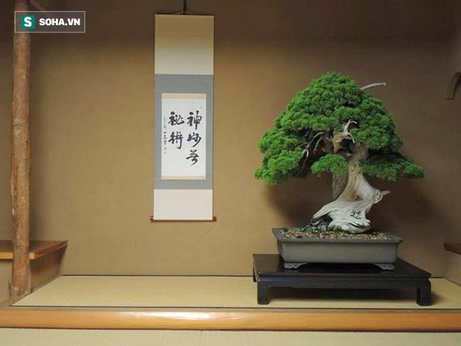 Bậc thầy bonsai Nhật và bí mật của vườn cảnh trăm tuổi được đại gia thế giới ước thèm - Ảnh 5.