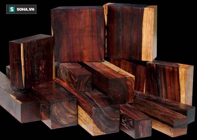 Những cây gỗ tươi quý hiếm bậc nhất thế giới, có giá trên trời mà đại gia săn lùng - Ảnh 9.
