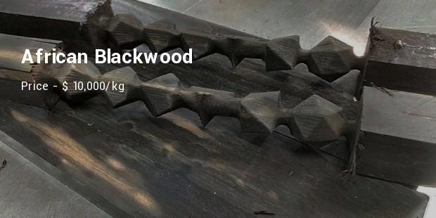 Từ cây gỗ 1 triệu USD không bán ở Thanh Hóa: 10 loại gỗ đắt xắt ra miếng bạn biết chưa? - Ảnh 10.