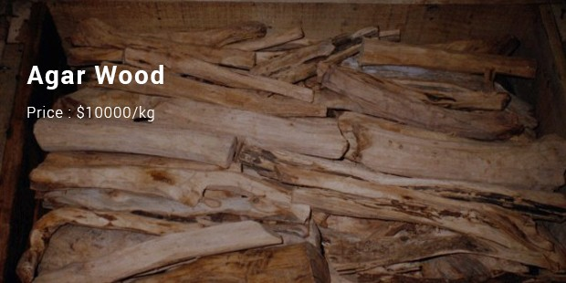Từ cây gỗ 1 triệu USD không bán ở Thanh Hóa: 10 loại gỗ đắt xắt ra miếng bạn biết chưa? - Ảnh 7.